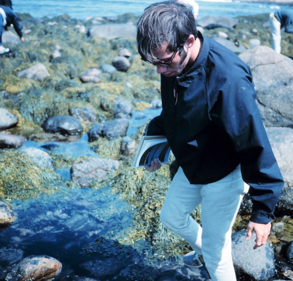 St. Mary's College of Maryland student investigating the various seaweeds and invertebrates found in Massachusetts tide pools.