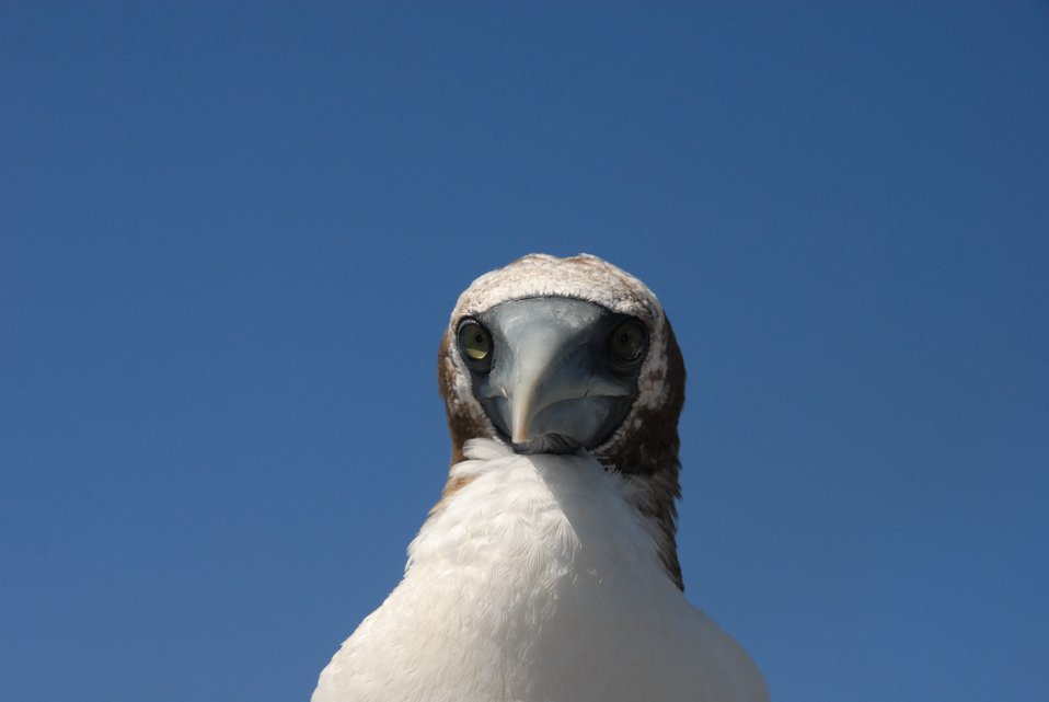 Booby up close and personal.