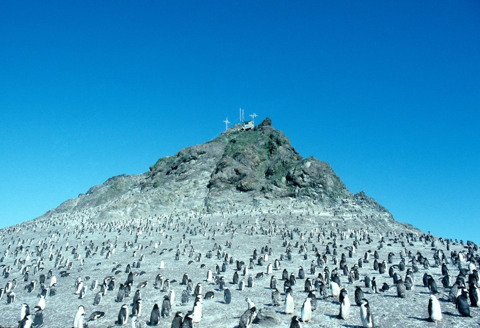 A penguin colony near a weather station, Seal Island.