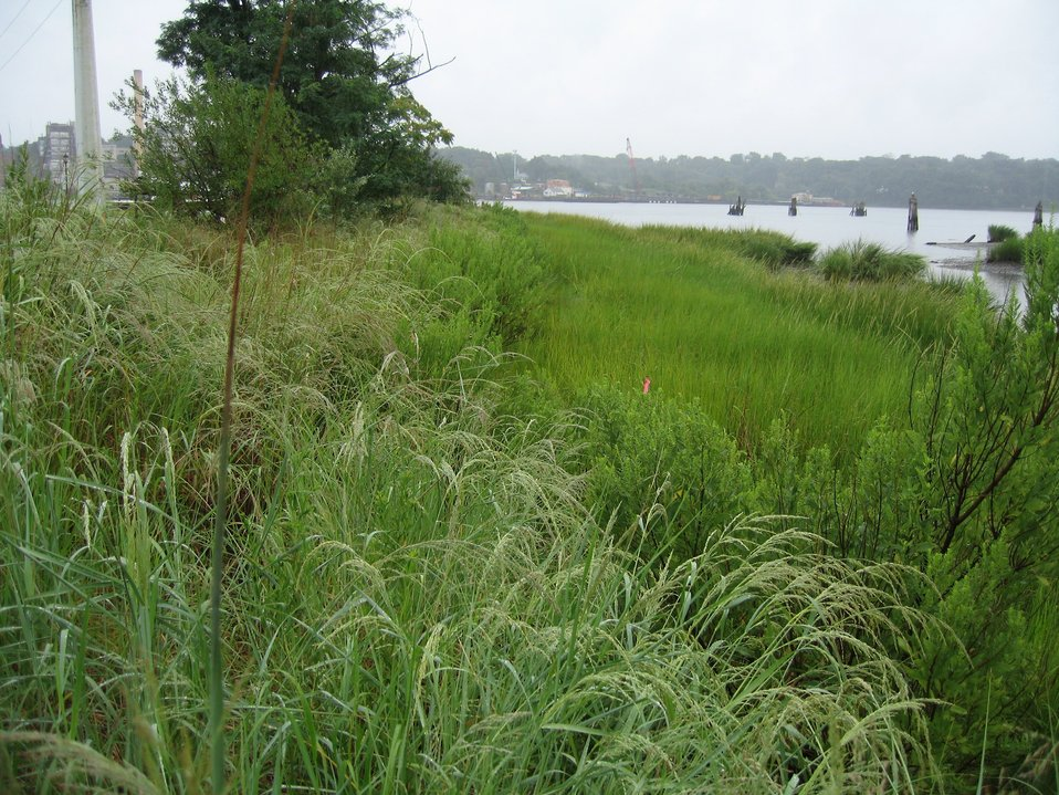 Restored shoreline at Hempstead Harbor. This area was designated a superfund site and was used as a petroleum and hazardous waste storage site from 1930 to the 1970s.