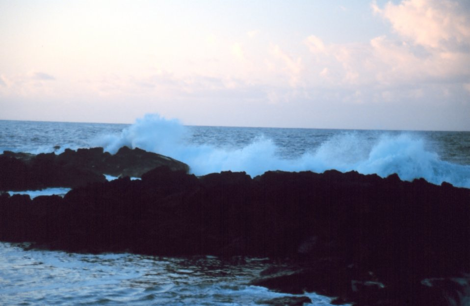 The coastline near Hilo