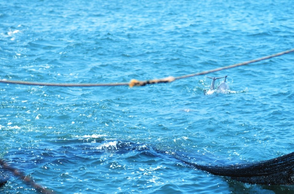 Net in the water during trawling operations