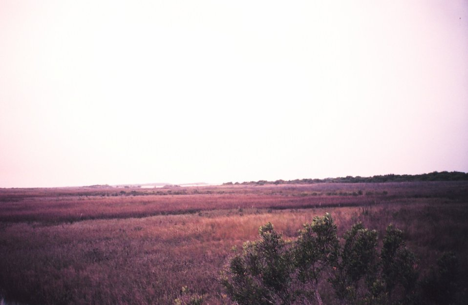 Natural marsh area primarily Spartina.  Critical habitat for shrimp, crabs, and many game and commercial fish species.