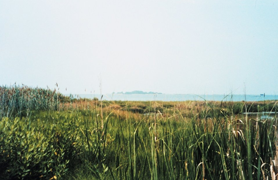 View across a marsh at Smith Island.