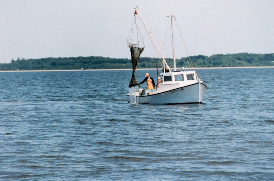 Clam dredging - although maintaining the tradition of the Chesapeake waterman, this harvesting method further stresses submerged aquatic vegetation.