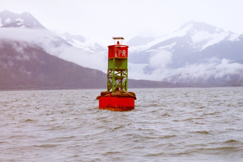 Sea lions find a resting place on a buoy in the labyrinth of Southeast Alaska waterways.