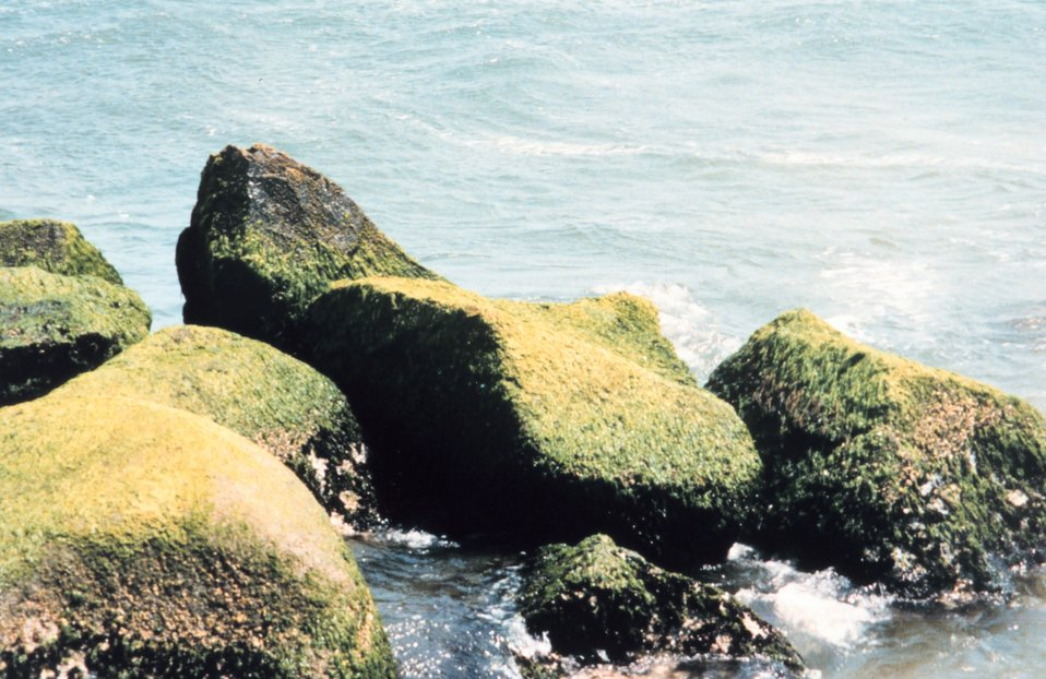 Moss covered boulders on a New England shoreline