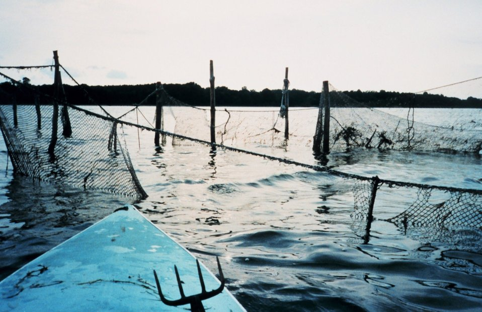 An abandoned pound net.  These are used to catch fish, but also entraps many turtles and aquatic birds.