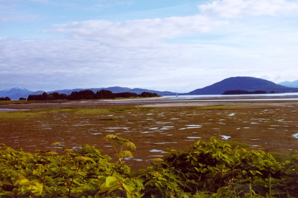 Low tide in a placid bay in Southeast Alaska