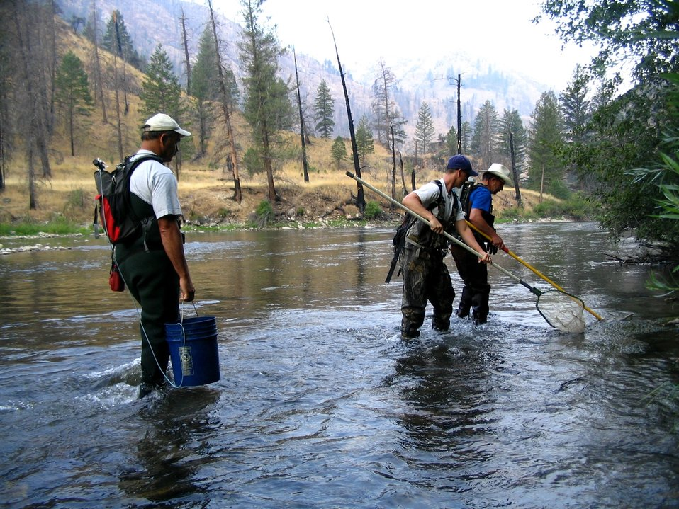 Electro-shocking for juvenile wild salmon (parr) to PIT-tag for mark recapture study in Salmon River drainage in Idaho wilderness.