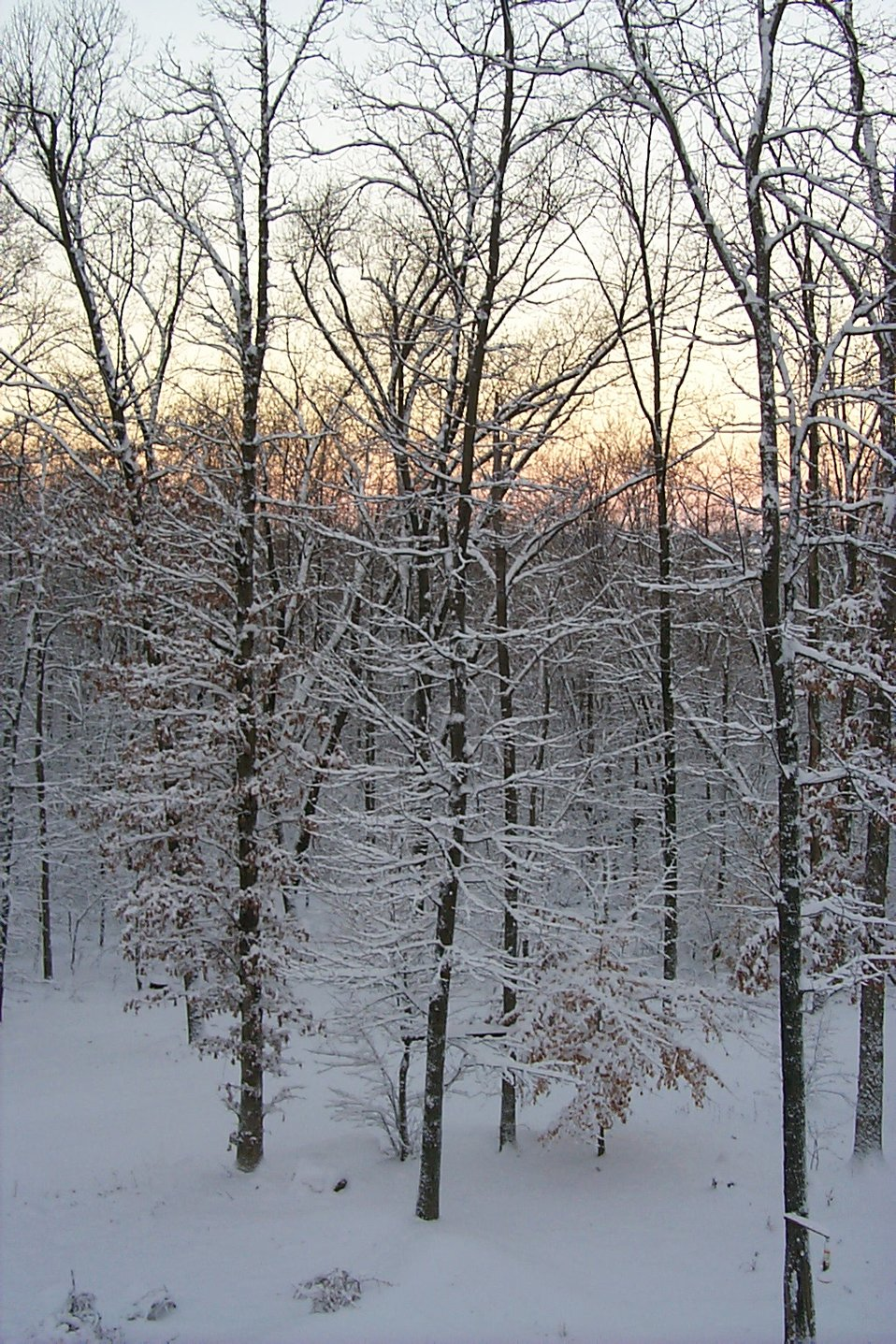 Snowy trees at break of day in the Harpers Ferry area.