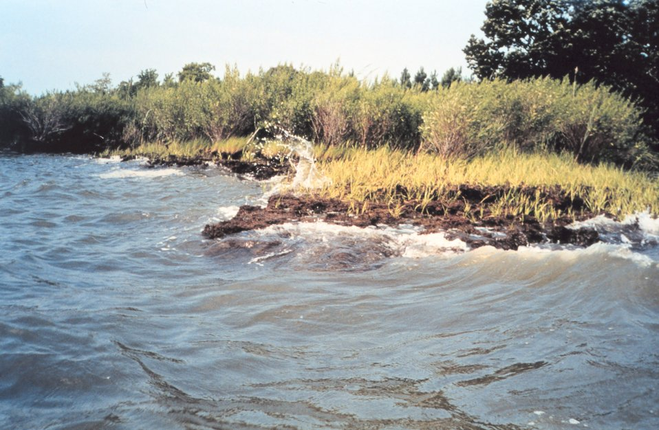 Like most areas in Chesapeake Bay, Wye Island suffers from the scourge of erosion as waves beat against the shoreline.