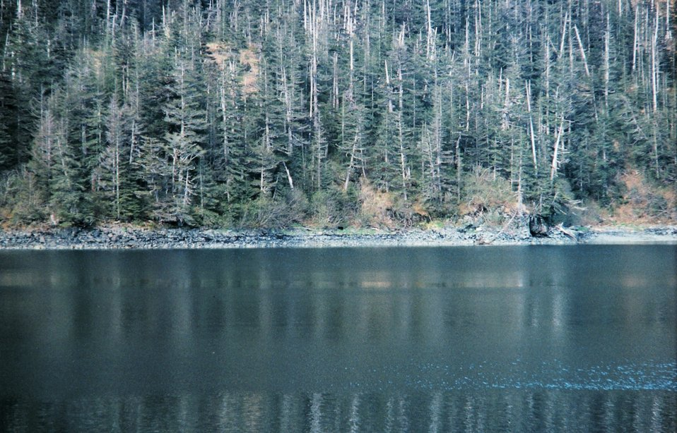 Shoreline in Prince William Sound