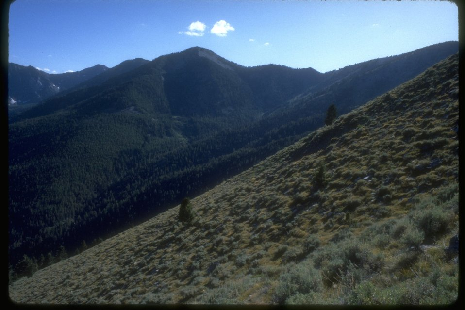 Scenic view of the forestlands on Huynt Mountain in the Elkhorns.