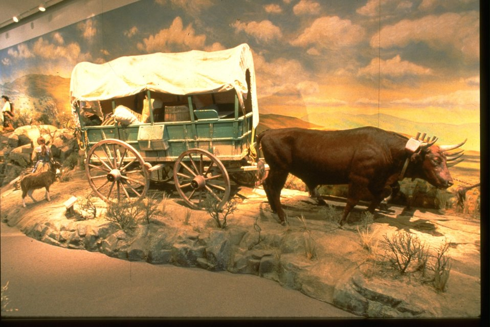 Living history exhibit at the NHOTIC with ox pulling a covered wagon.