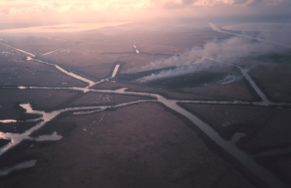 Burning off marsh south of New Orleans to improve next year's growth.  Numerous canals are in this area for oil and gas exploration.