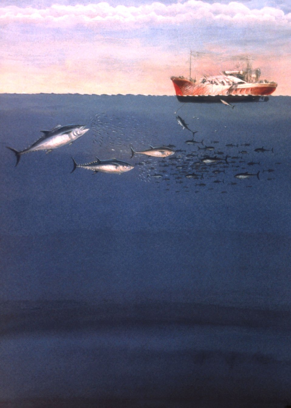 Artist's conception of school of tuna pursuing a school of bait fish while pole and line fishing is being conducted from fishing vessel.