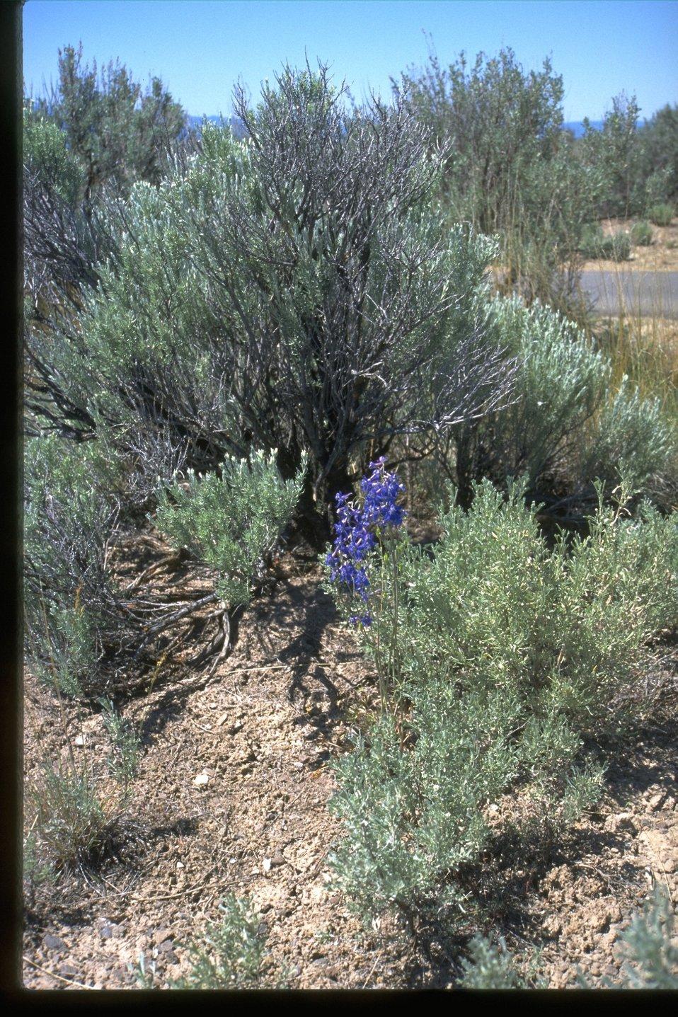 Wildflowers on Flagstaff Hill, near the NHOTIC.