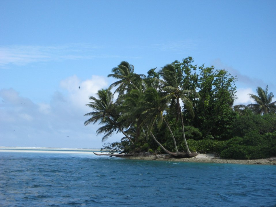 A tropical islet with palm fronds oriented in the direction of the prevailing winds.