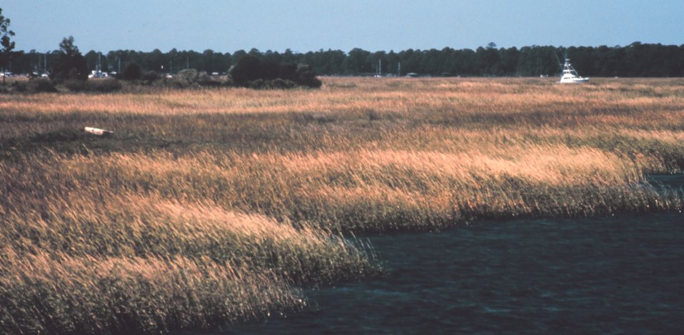 Wetlands in the vicinity of Charleston.