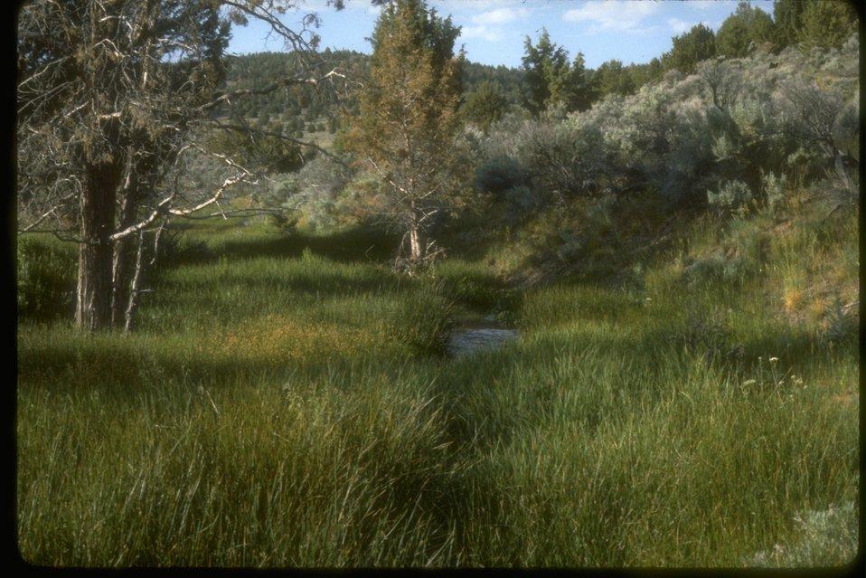 Riparian area along Duck Creek.