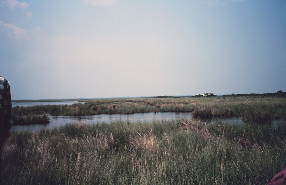 Broken marsh in Barataria Basin just west of the levee
