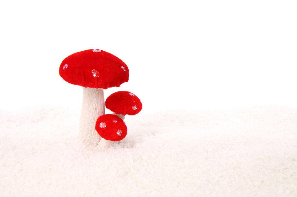 Mushrooms in snow