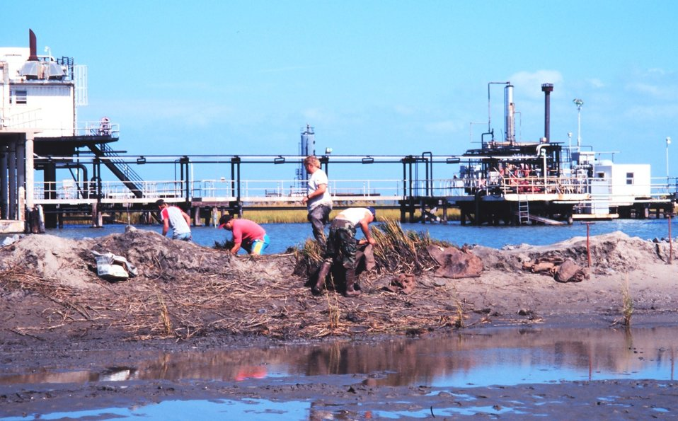 The Greenhill/East Timbalier workers bringing plants into dredge area.  Spartina  alterniflora was planted by hand to create new marsh.