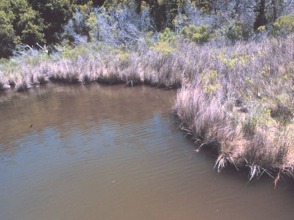 Wetlands in Albemarle Sound area
