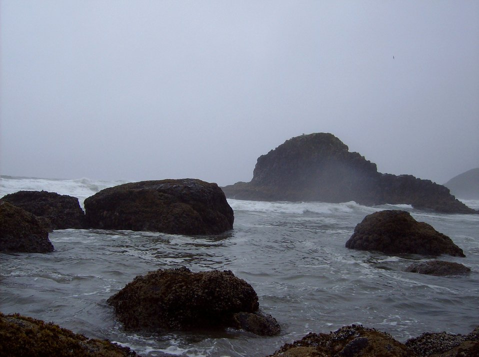 Rocks, surf, fog, seaweed, and tide pools at Ecola State Park.
