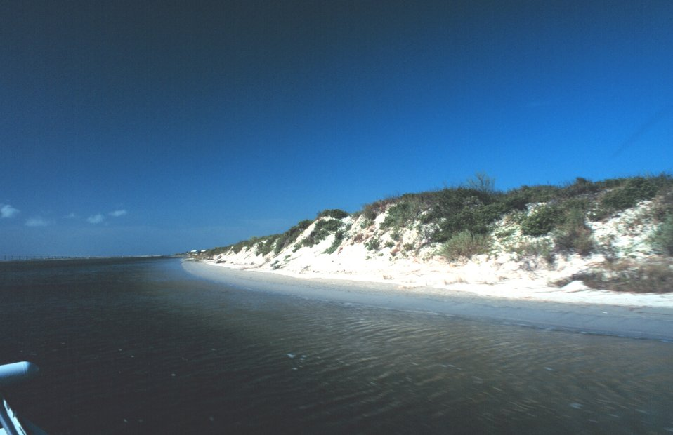 Vegetation-covered dunes on the west side of Padre Island