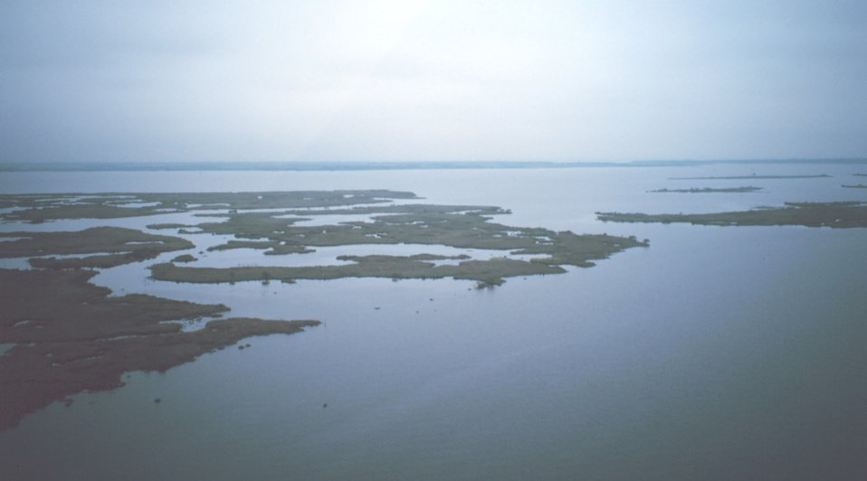 Eroding marsh peninsula between Bayous Perot and Rigolettes