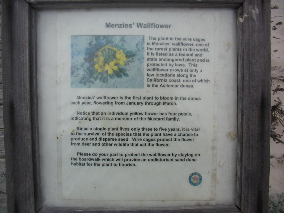 Menzies wallflower.  This is an endangered species.