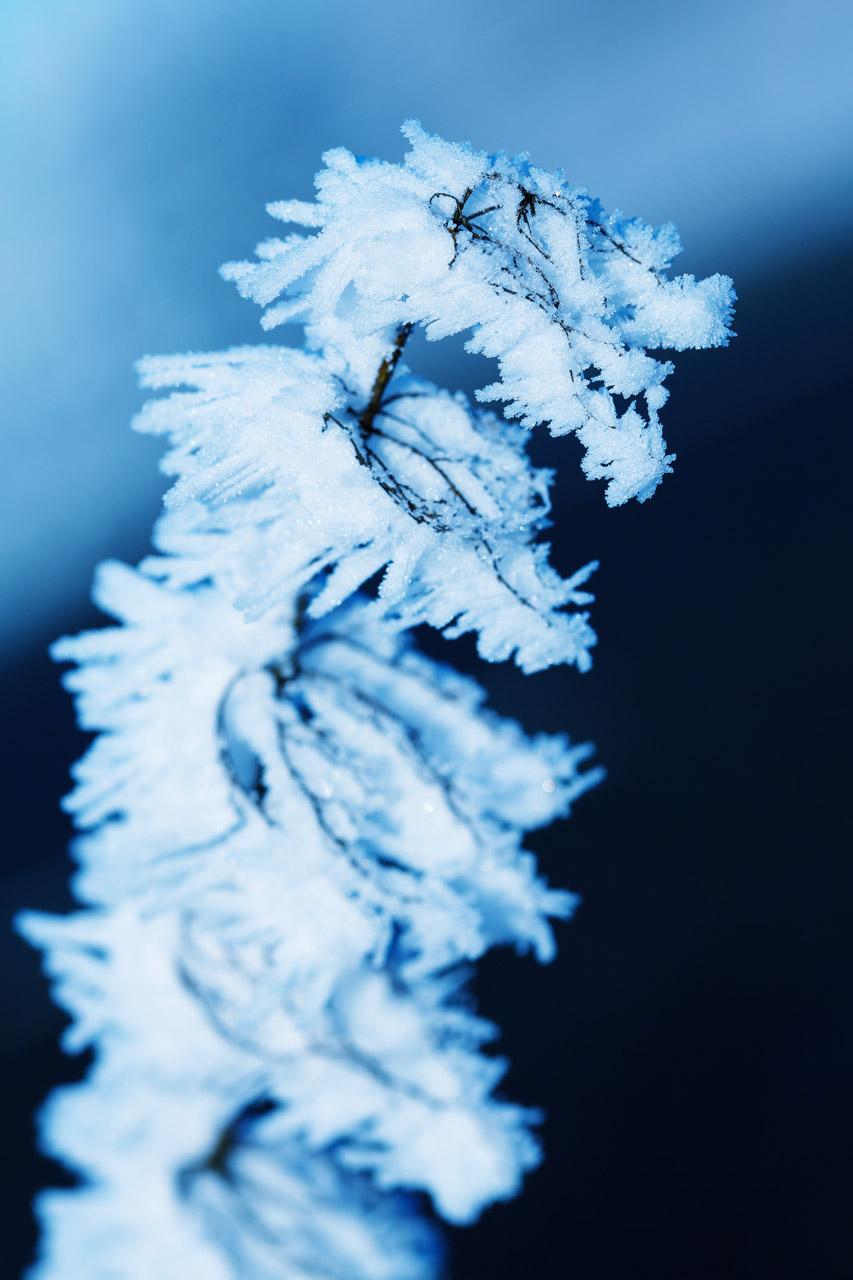 Macro hoar frost