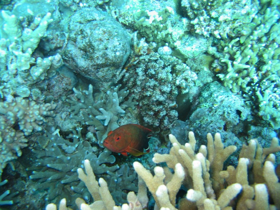 Unidentified red fish
