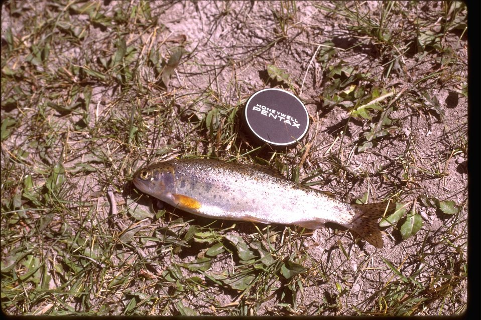 A small trout laying on the ground next to a camera lens cap for scale.