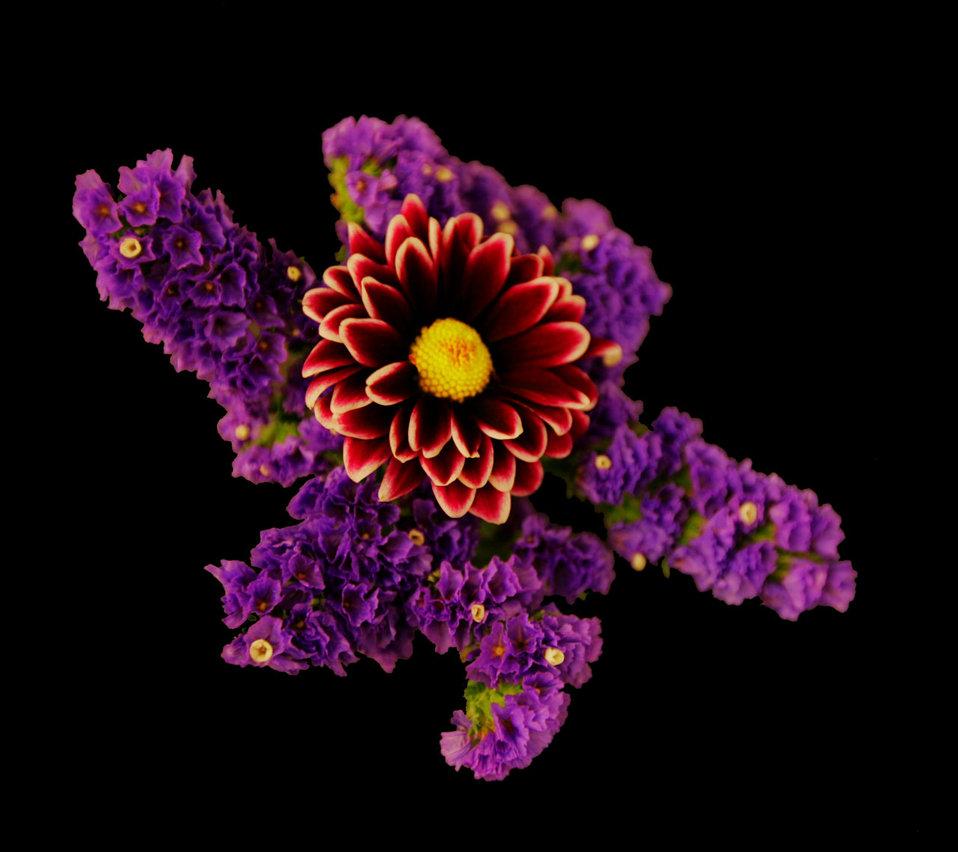 Purple explosion