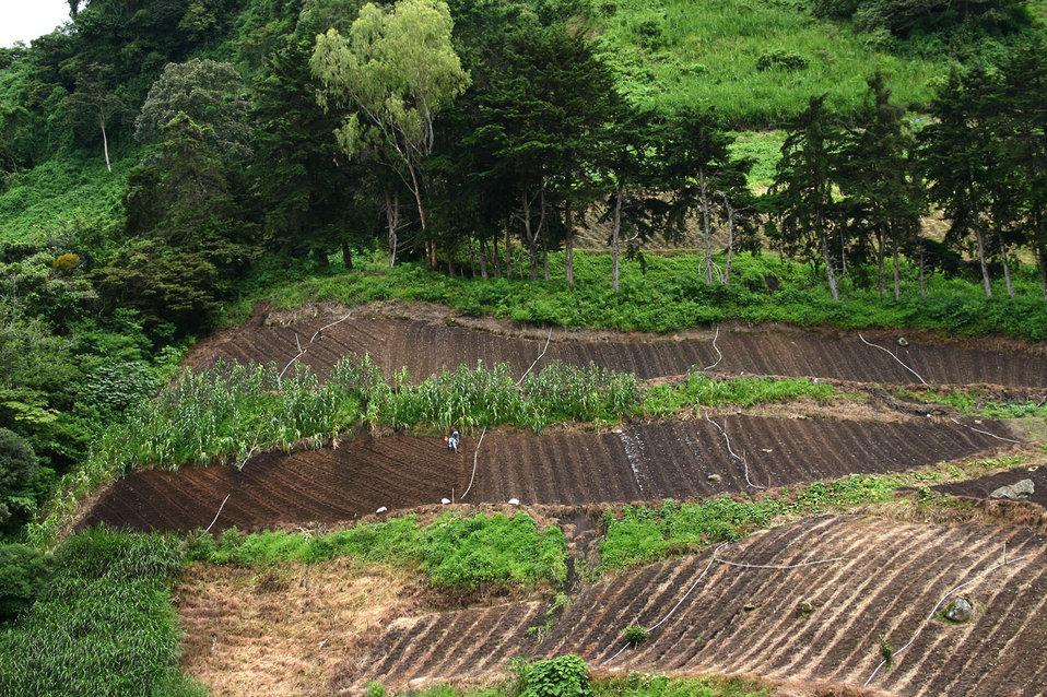 Farming in panama