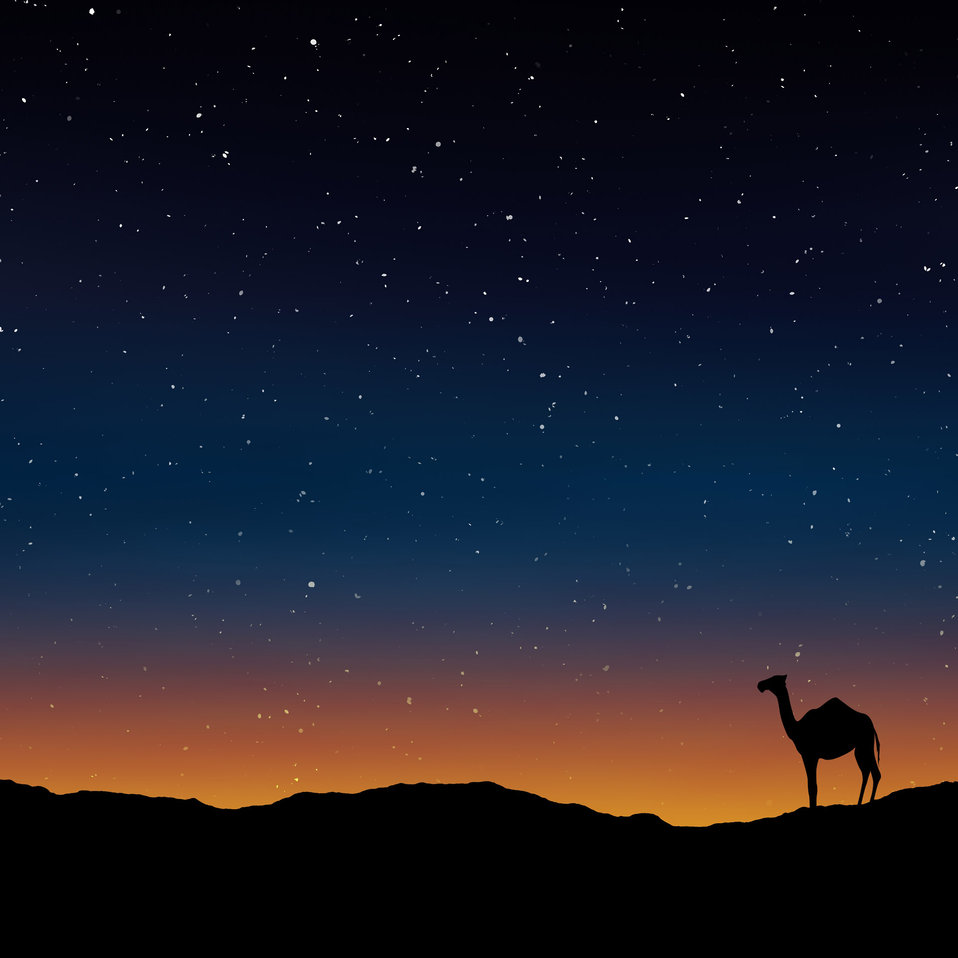 Dusk and camel