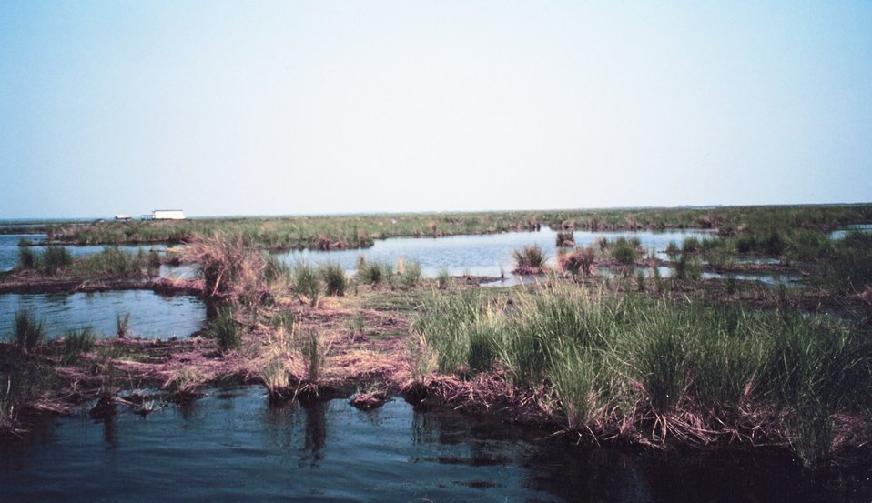 Deteriorating marsh - ponds increase in size as marsh disappears.
