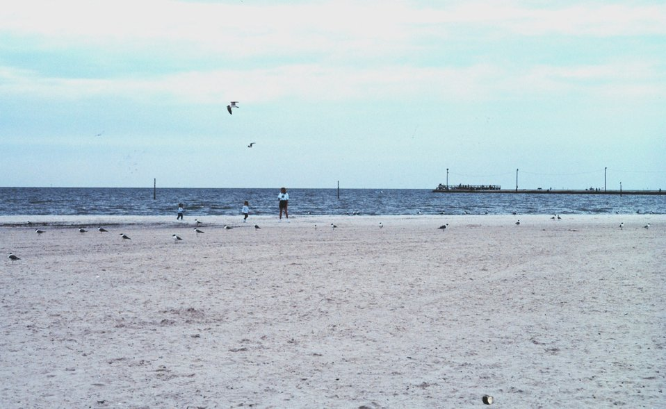 Sea birds along a nearly deserted beach
