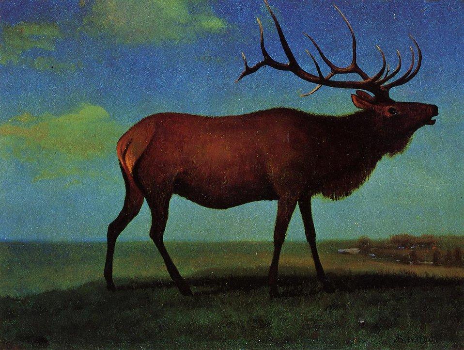 Bierstadt Albert Elk.jpg