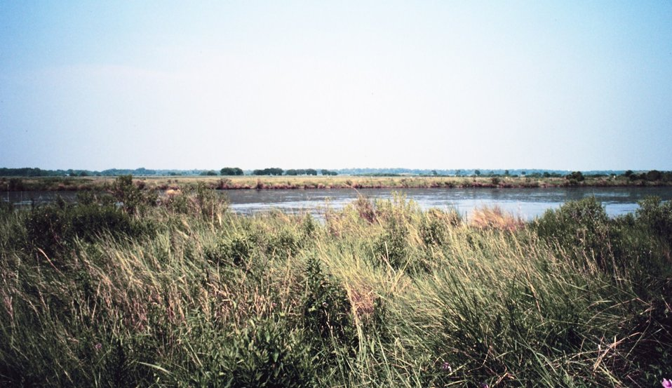 Open pond within mixed vegetation marsh.