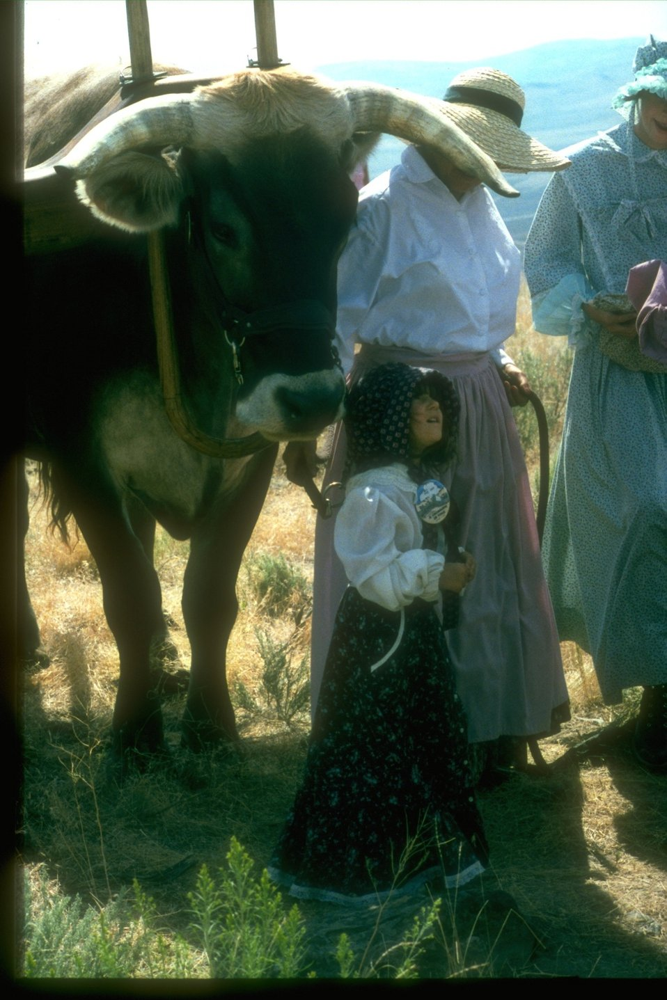 A living history with women and a child dressed in clothes from pioneer days.  A large ox is standing by the young girl.
