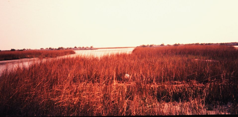 Natural marsh area adjacent to land created as part of settlement an oil spill.