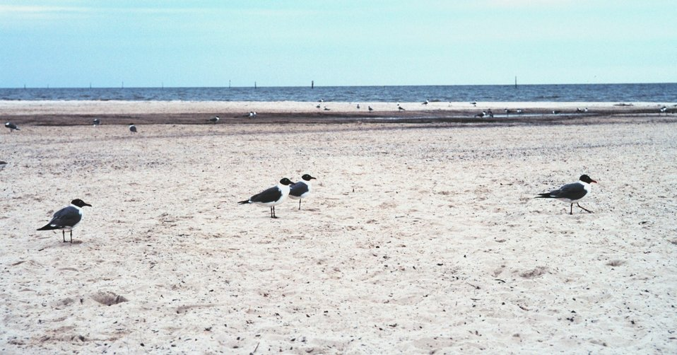 Sea birds along a deserted beach