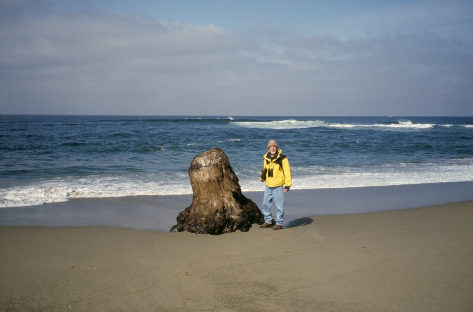 Point Reyes Great Beach.  Beach Watch volunteer next to large tree stump.