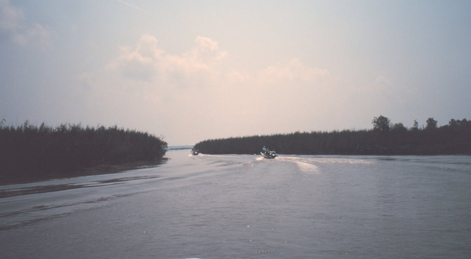 Boats moving through coastal bayou lined with Phragmites, commonly called roseau cane.