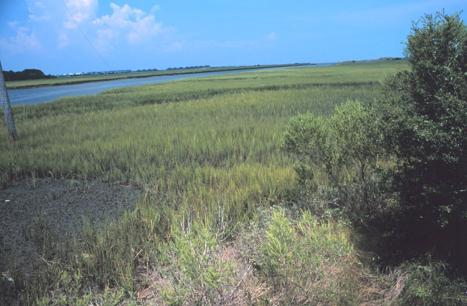 Tidal wetlands along Johnson Creek