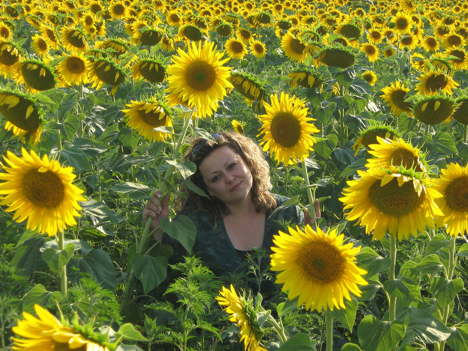 In the sunflowers ...